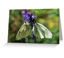 Black-veined Whites Greeting Card