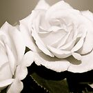 Roses (black&white) by Lou Wilson
