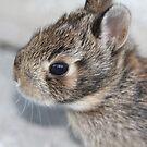 Tiny baby bunny by ZeeZeeshots