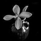 Monotone Macro Floral Arragement by Glenn Cecero