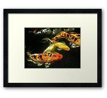 Koi Community Framed Print