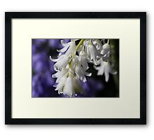 Purple and White Beauty Framed Print