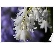 Purple and White Beauty Poster