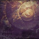 Old Snail Shell by Paul Woods