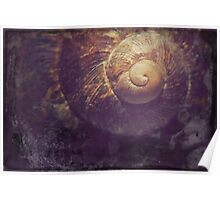 Old Snail Shell Poster