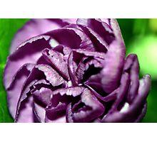 Purple Beauty Photographic Print
