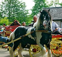 'Am I on camera'??? (Horse&Trap at Appleby Fair) by Lou Wilson
