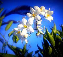 Tiny white flowers by MONIGABI