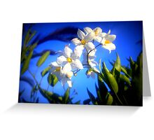 Tiny white flowers Greeting Card