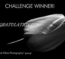 Congrats!  Banner challenge by Laurie Minor