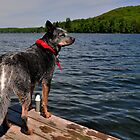 The Edge of the Water by SamTheCowdog