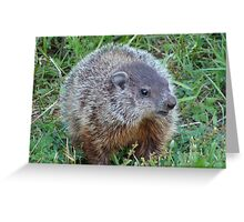 A Surprise Encounter Greeting Card