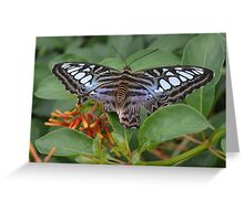 Blue Clipper Butterfly Greeting Card