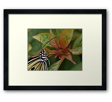 """""""Smiling"""" Paper Kite Butterfly Framed Print"""