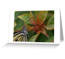 """Smiling"" Paper Kite Butterfly Greeting Card"