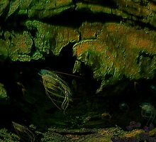 20,000 LEAGUES UNDER THE SEA...PLEASE VIEW LARGER.. by Sherri     Nicholas
