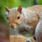 Grey Squirrel by Magic-Moments