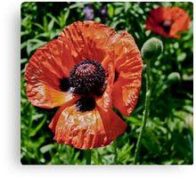 Orange Flower Power Canvas Print
