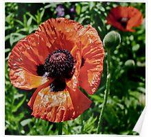 Orange Flower Power Poster