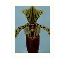 Proud Orchid Art Print