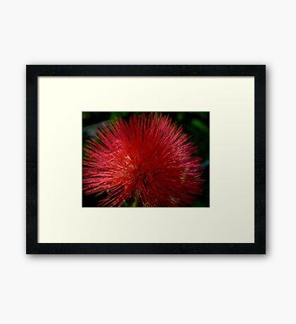 Red Pom Pom Framed Print
