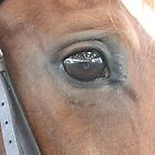 Chardonney's eye by Abigail Jennings