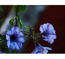 The life and death of the flower. Photographic Print