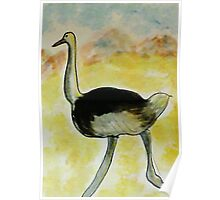 Th Ostrich, watercolor Poster