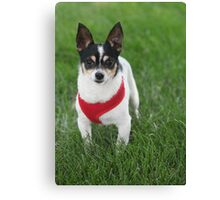 Handsome Eddie Canvas Print