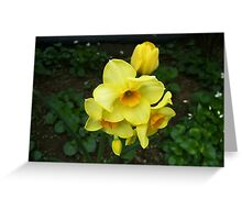 Multiple Daffodils Greeting Card
