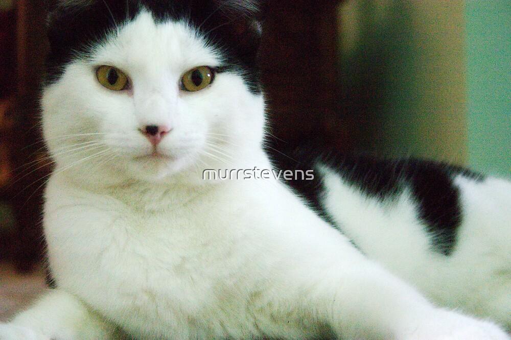Max by murrstevens
