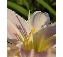 Good Morning Lily III  Photographic Print
