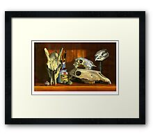 Still life animal skulls Framed Print