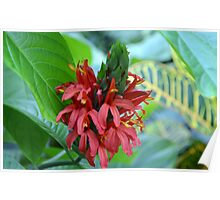 Red Tropical Flower  Poster
