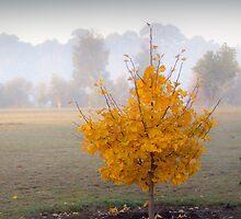 Autumn Tree by Craig A. White (Australia)
