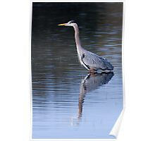 Heron Reflection Poster