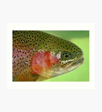 Oregon Rainbow Trout Art Print