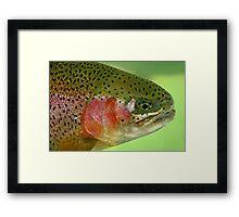 Oregon Rainbow Trout Framed Print
