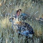 Wascally Wabbit by Corri Gryting Gutzman