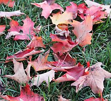 Fall Leaves on the Ground by boydhowell