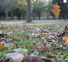 Grass Amongst the Leaves by boydhowell
