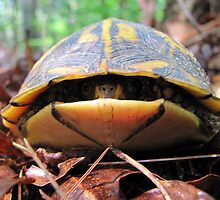 Turtle Sneaks a Peek by Jean Gregory  Evans