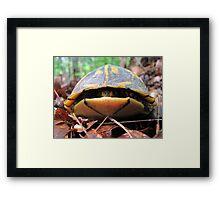 Turtle Sneaks a Peek Framed Print