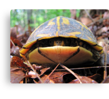 Turtle Sneaks a Peek Canvas Print