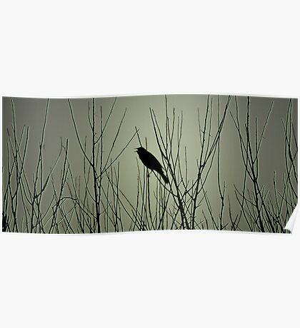 Songbird Poster