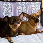 Minnie and Nina Relaxin' by Sherri Fink