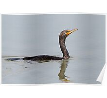 Fish Finder / Double Crested Cormorant Poster