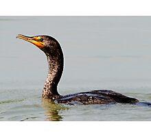 Fish Finder Too / Cormorant Photographic Print
