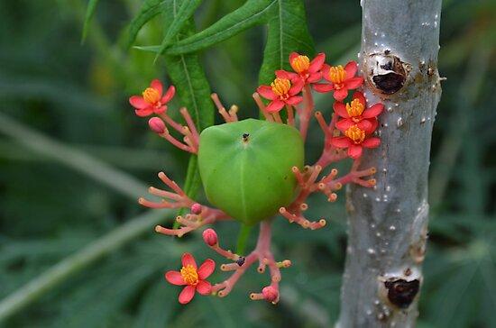 Little Flowers with Green Pod by Paula Betz