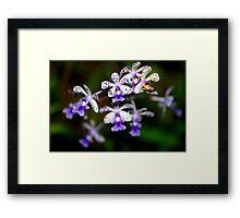 Orchid - Costa Rica Framed Print